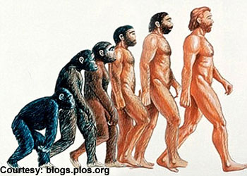 From amoeba to human beings. What next? Has evolution stopped?