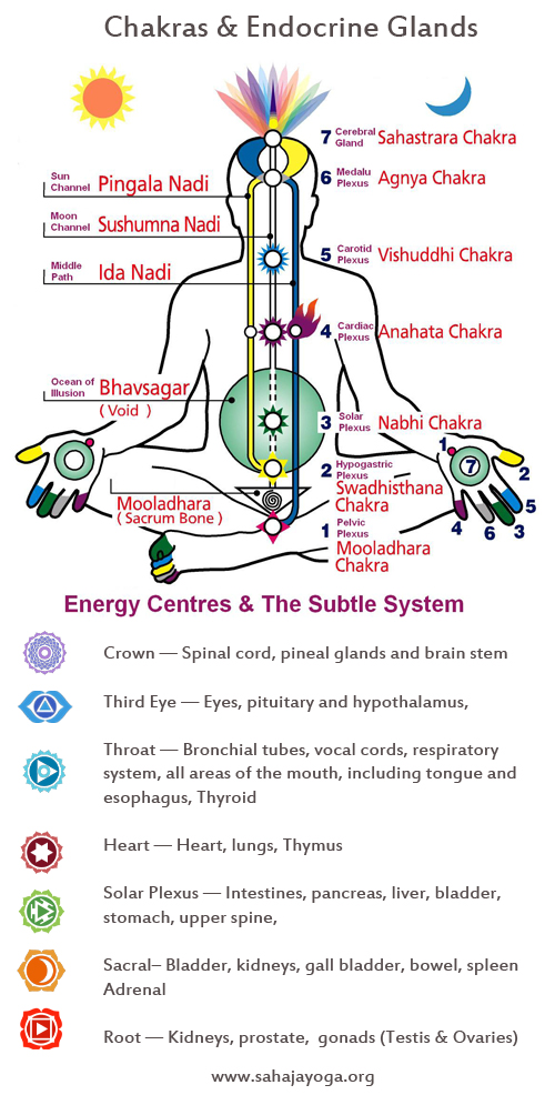 Chakras Spine And Brain