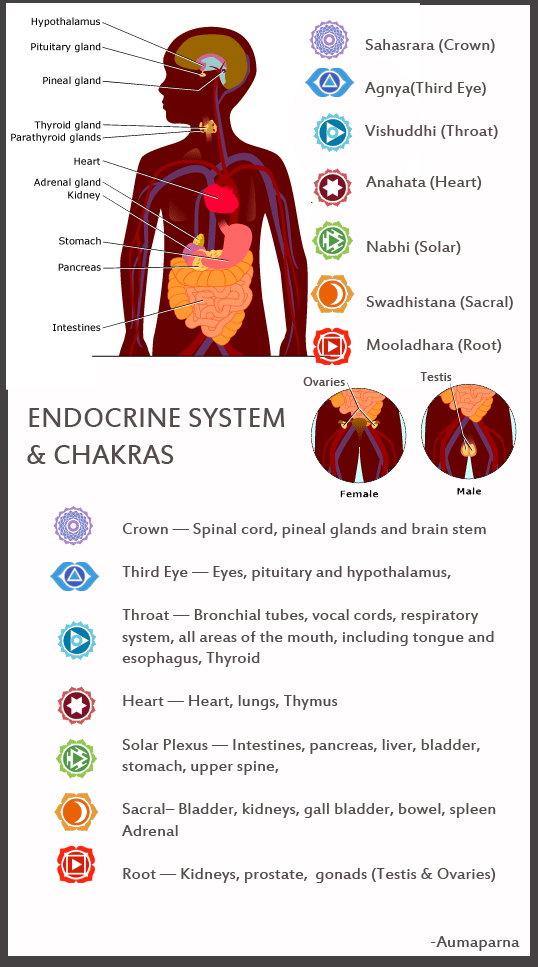 The relation between Energy Centers & Endocrine System - Blog Pyramid