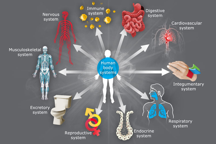 Just like the body has several systems performing different and complex functions to run the body smoothly – so does a Nation have various systems with its own function specific vocation to perform.